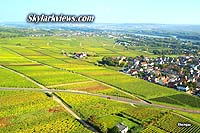 Rheingau - colored green and yellow